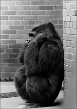 Opinion essay about zoos?