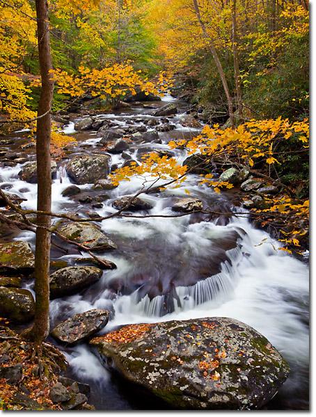 Nature Photography Tripod