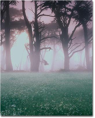 Landscape Photography Articles