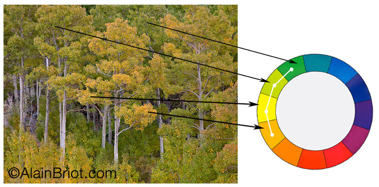 Color Harmonies In Nature Photography